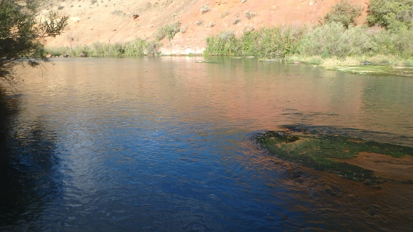 Owyhee river brown trout bamboopursuits for Owyhee river fly fishing