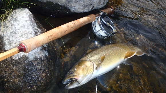 A nice Bull Trout that took a #6 Black Wooley Bugger with a weighted gold conehead.