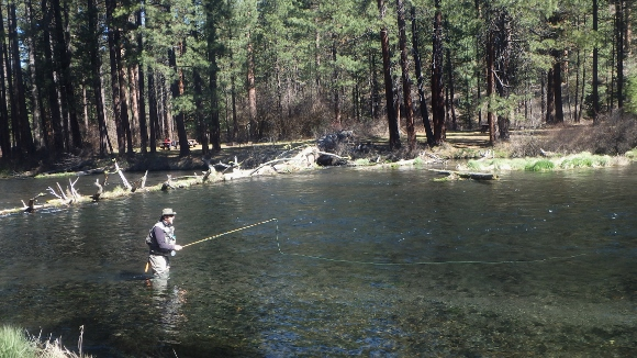 Tony working a dry fly with his quad fly rod.