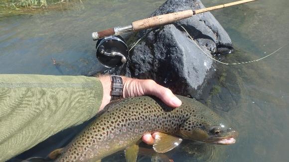 Owyhee River Brown