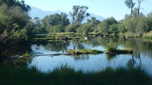 Nelson's Spring Creek