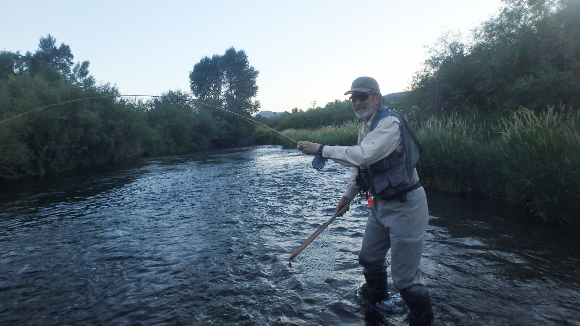 Fighting a nice Cutthroat that took a small X-Caddis