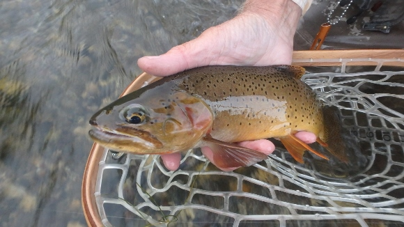 A nice cutthroat to the net